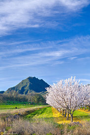 Almond Blooms at the Sutter Buttes #4
