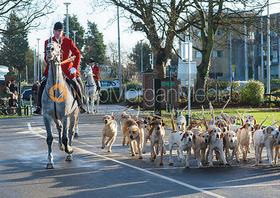 Andrew Osborne and hounds arriving at the meet - The Cottesmore Hunt in Melton Mowbray 2/1