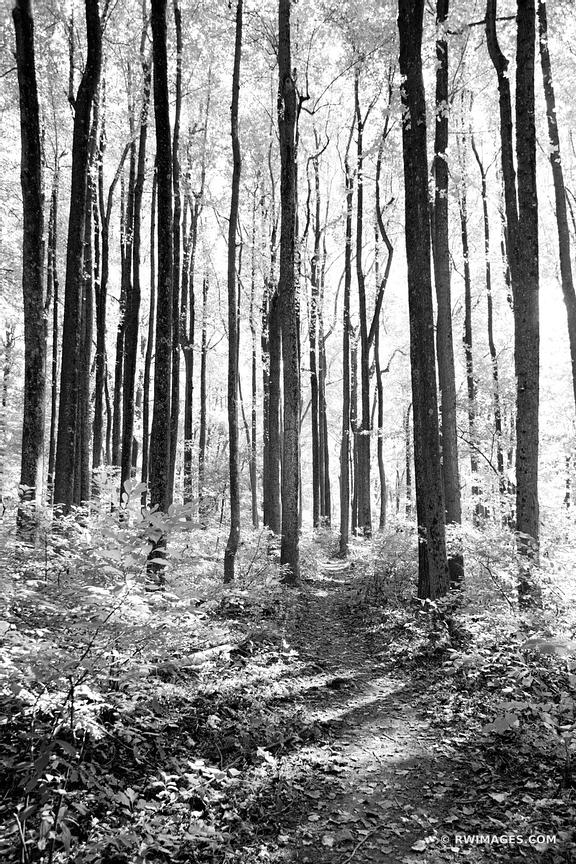 FOREST TRAIL SHENANDOAH NATIONAL PARK VIRGINIA BLACK AND WHITE VERTICAL