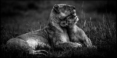 4169-Lioness_with_its_cub_Kenya_2006_Laurent_Baheux