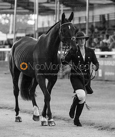 Nana Dalton and ABSOLUT OPPOSITION at the trot up, Land Rover Burghley Horse Trials 2018
