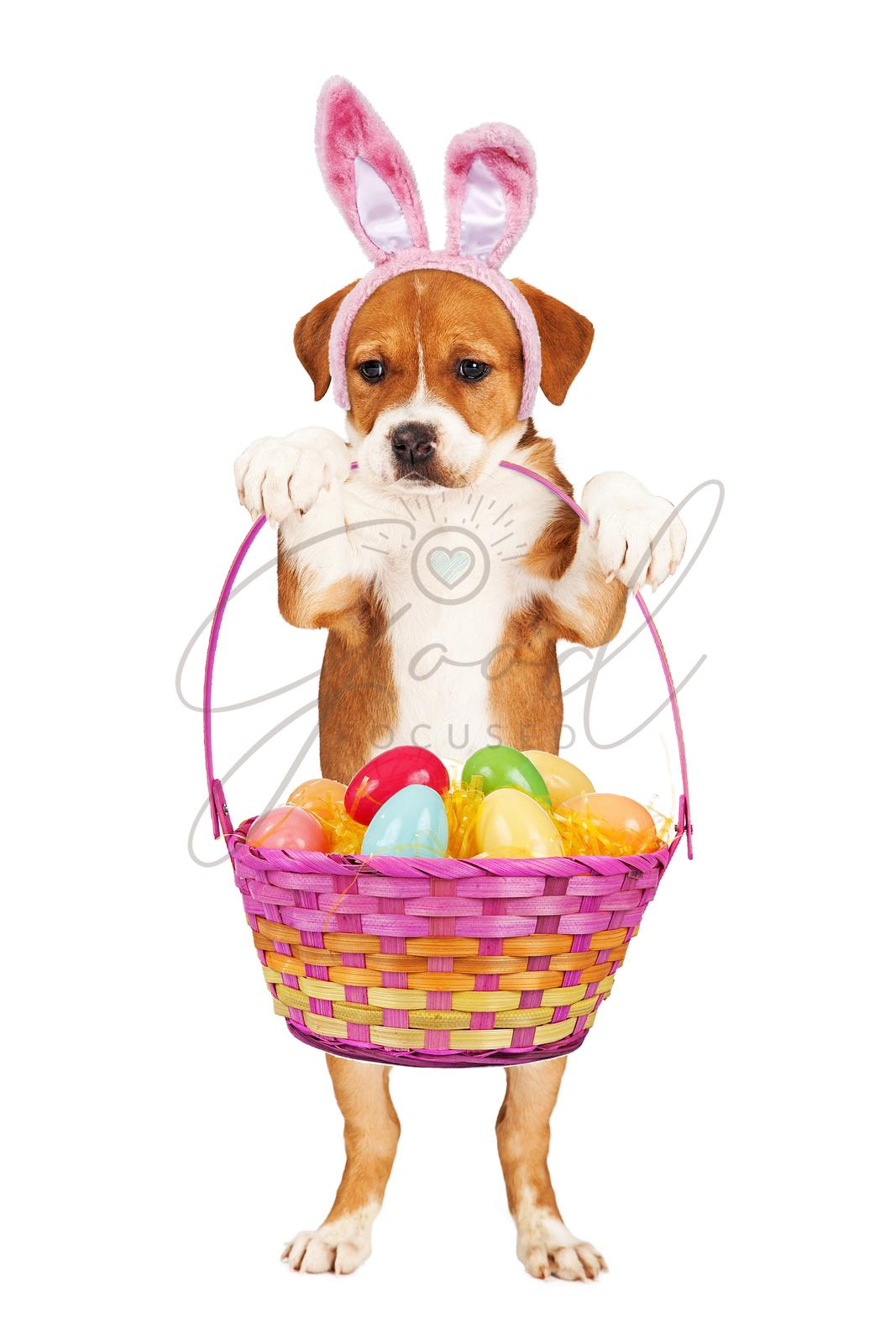 Puppy Holding Easter Basket