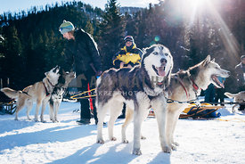 woman scratches smiling siberian husky sled dogs in the snow
