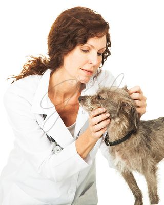 Female Veterinarian Examining a Small Dog