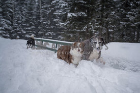 Goffy dogs friends grinning in the snow