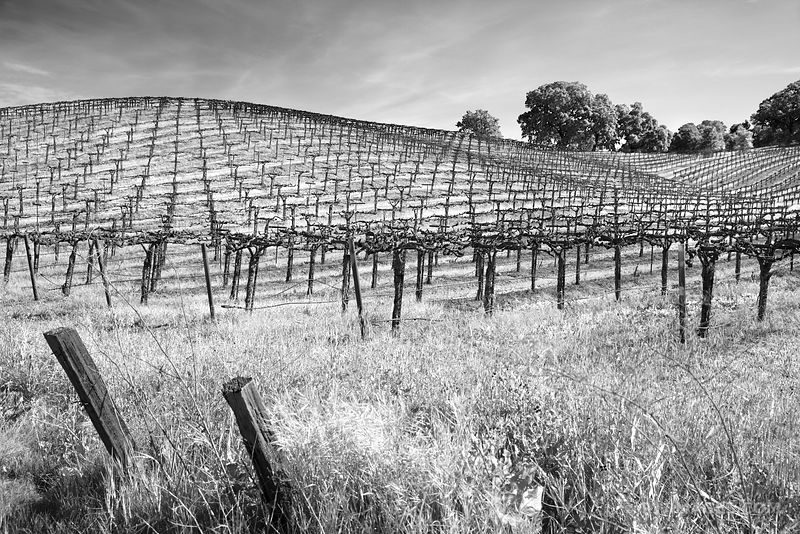 Napa Valley California - Black and White Photos