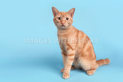 Full body cat sitting looking at camera