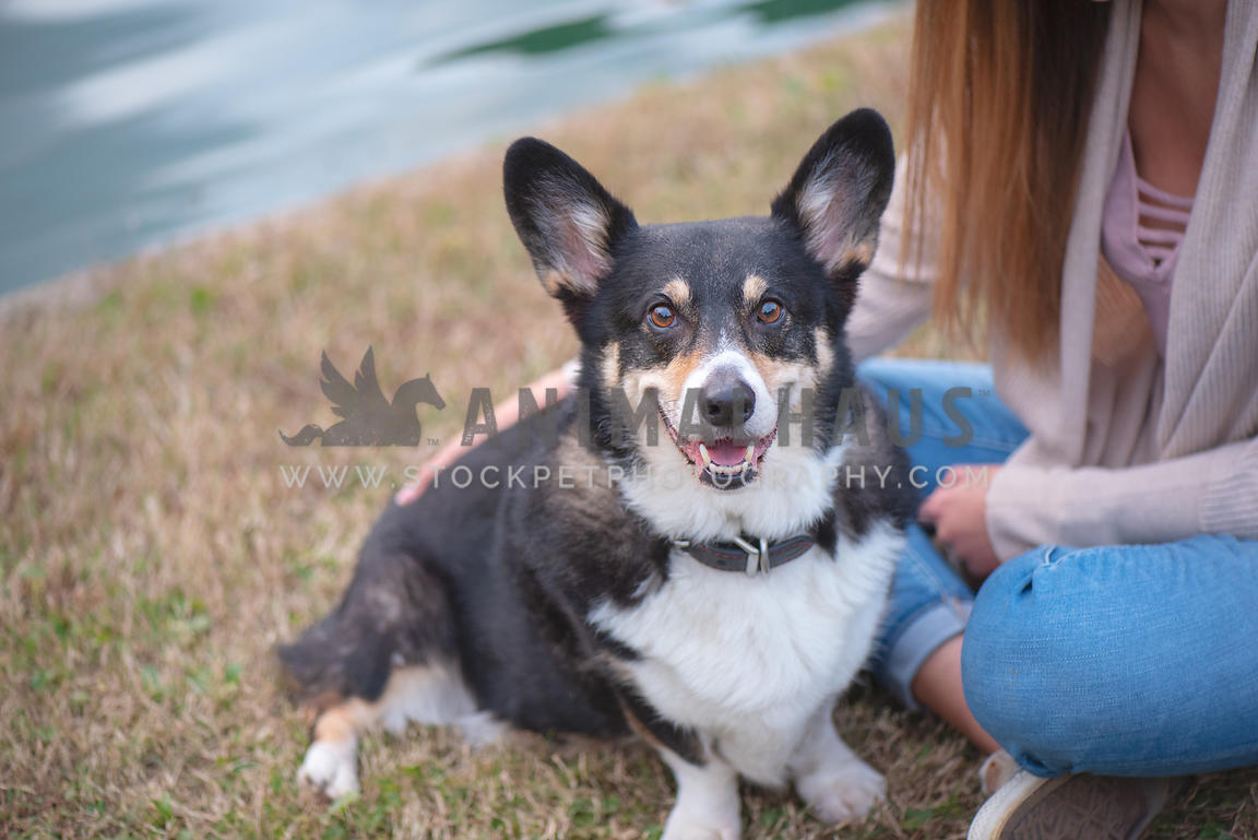 smiling corgi sitting next to his dog mom in the grass