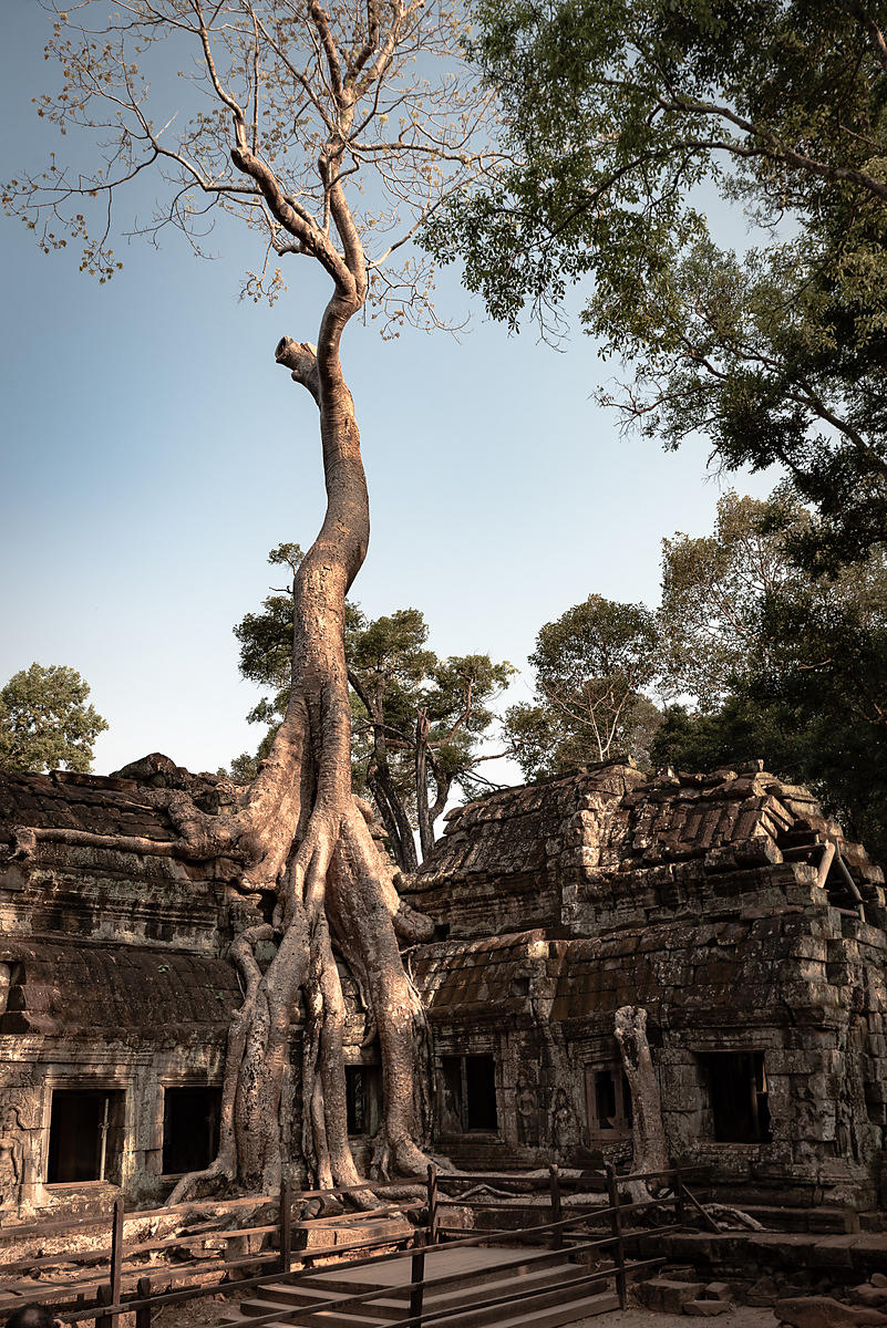 Temple de Ta Prohm/Angkor - Cambodge