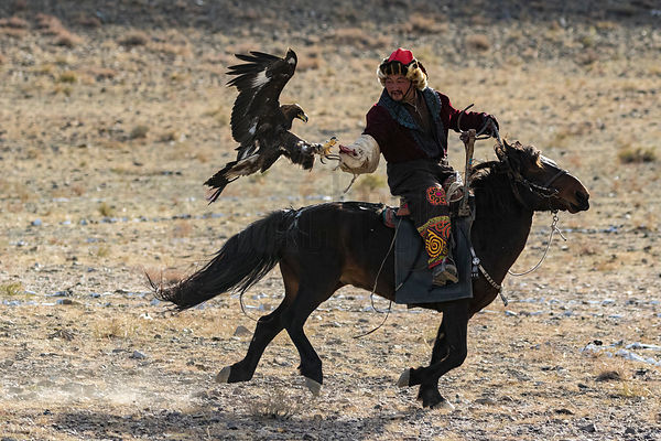 Golden Eagle Hunter Training Eagle to Land