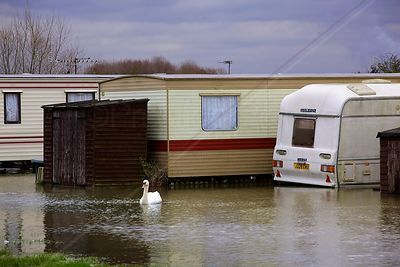 Swan Swimming past Garden Shed on Flooded Mobile Home Site