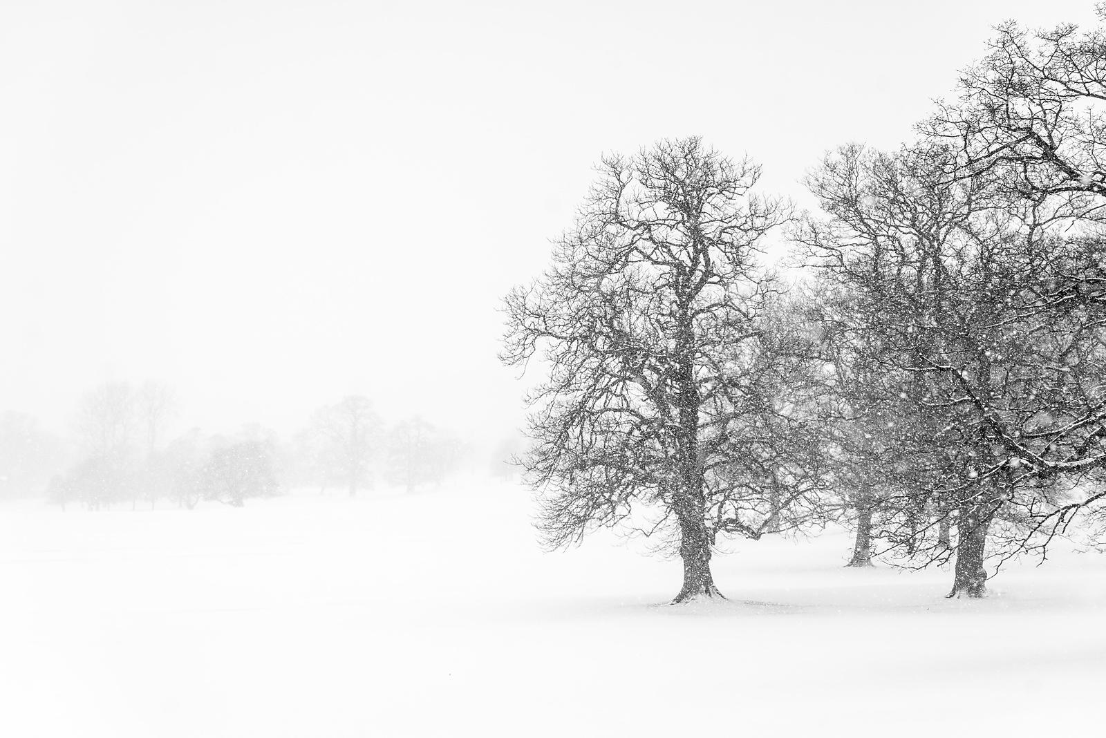 Chatsworth trees in snow