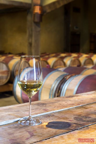 Glass of white wine in a winery cellar, New Zealand
