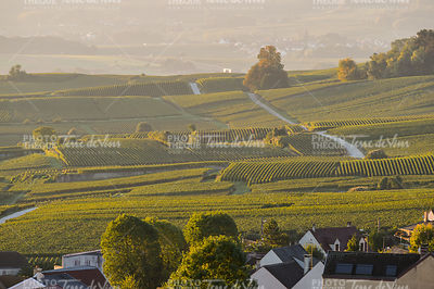 Champagne vineyards Villedomange in Marne department, France
