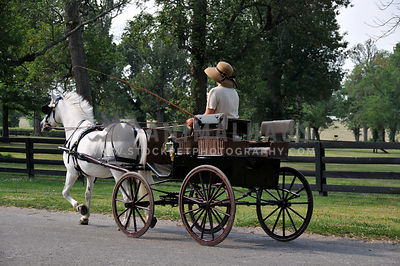gray pony pulling a carriage