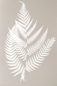 fern frond silhouette - white silhouette on color background-.symbol of New Zealand