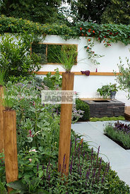 Contemporary garden, garden designer, Pavement, Small garden, Urban garden,