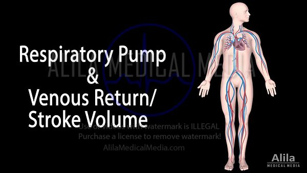 Respiratory pump and Venous return/Stroke volume NARRATED animation