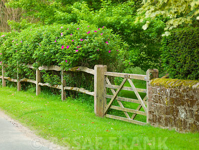 Garden with wooden fence in countryside