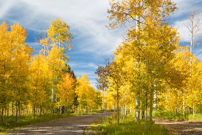 Colorful Aspens and Road