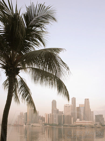 Skyscrapers and palm tree