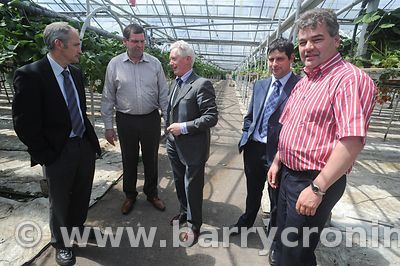 Minister Shane McEntee visit to strawberry farm