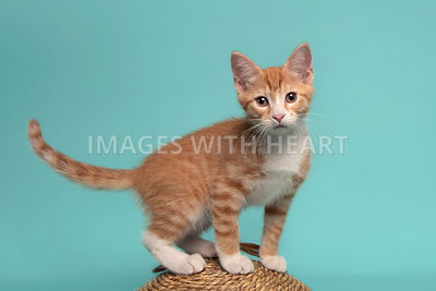 Young cat standing on scratcher