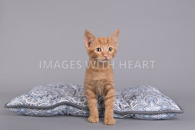 Kitten standing on pillow eyeing the camera