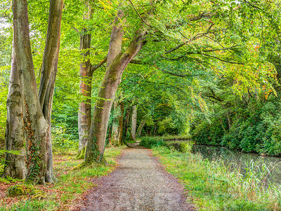 Path alongside Basingstoke Canal, Hampshire