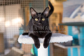 Black cat laying on cat tower at the animal shelter