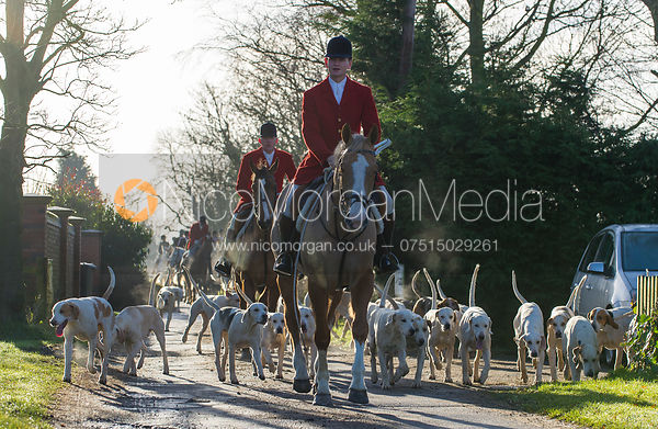 Whipper-In Edward Winnington and the Quorn Hunt Hounds