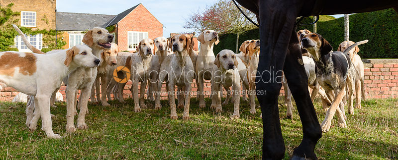 Cottesmore hounds, Cottesmore Hunt Opening Meet 2018