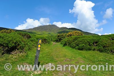 Carlingford Sliabh Foye