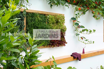 garden designer, Mini potager, Mini Vegetable garden, Salad, Tropaeolum majus, Foliage wall, Green wall, Vegetation wall, Wal...