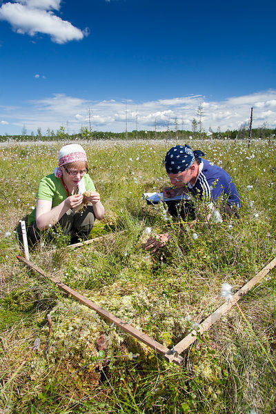 Plant monitoring on the restored mire