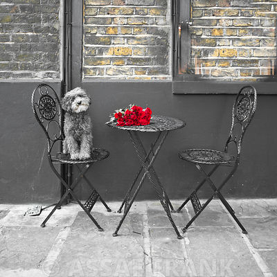Dog Sitting on a chair with a banch of roses on a table