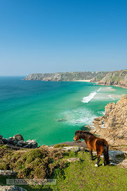 Horse on the cliffs above the beach at Porthcurno,  Cornwall - BP6675