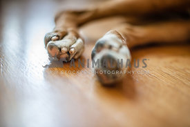 Two rear dog paws on wood floor
