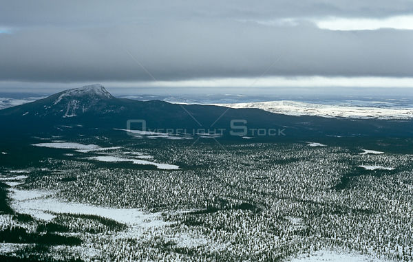 Aerial view over northern conifer forests, mainly black spruce {Picea mariana} Canadian Arctic