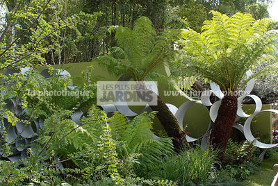 Contemporary garden, Digital, Tree Fern, Tropical garden