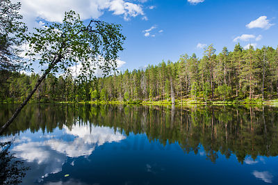 Small pond in Oulanka National Park