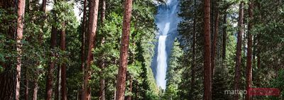 Panoramic of waterfall and forest, Yosemite, USA