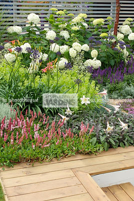 Aromatic plant, Border, Border with flowers, garden designer, Perennial, Terrace, Contemporary Terrace, Digital