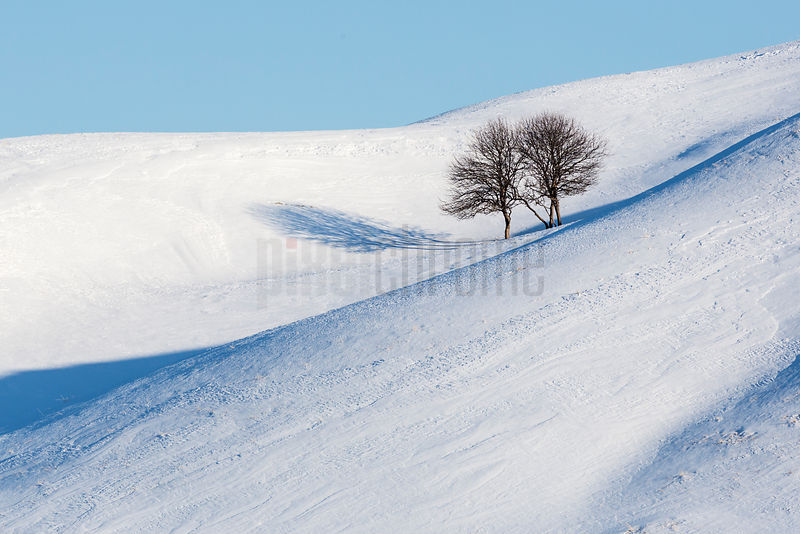 Apple Trees in a Snow Covered Field