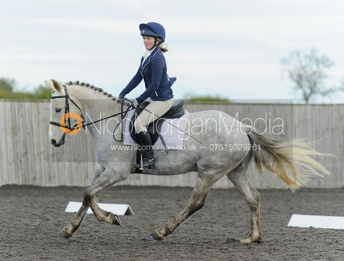 Unaffiliated dressage, Ranksboro 2/5/16