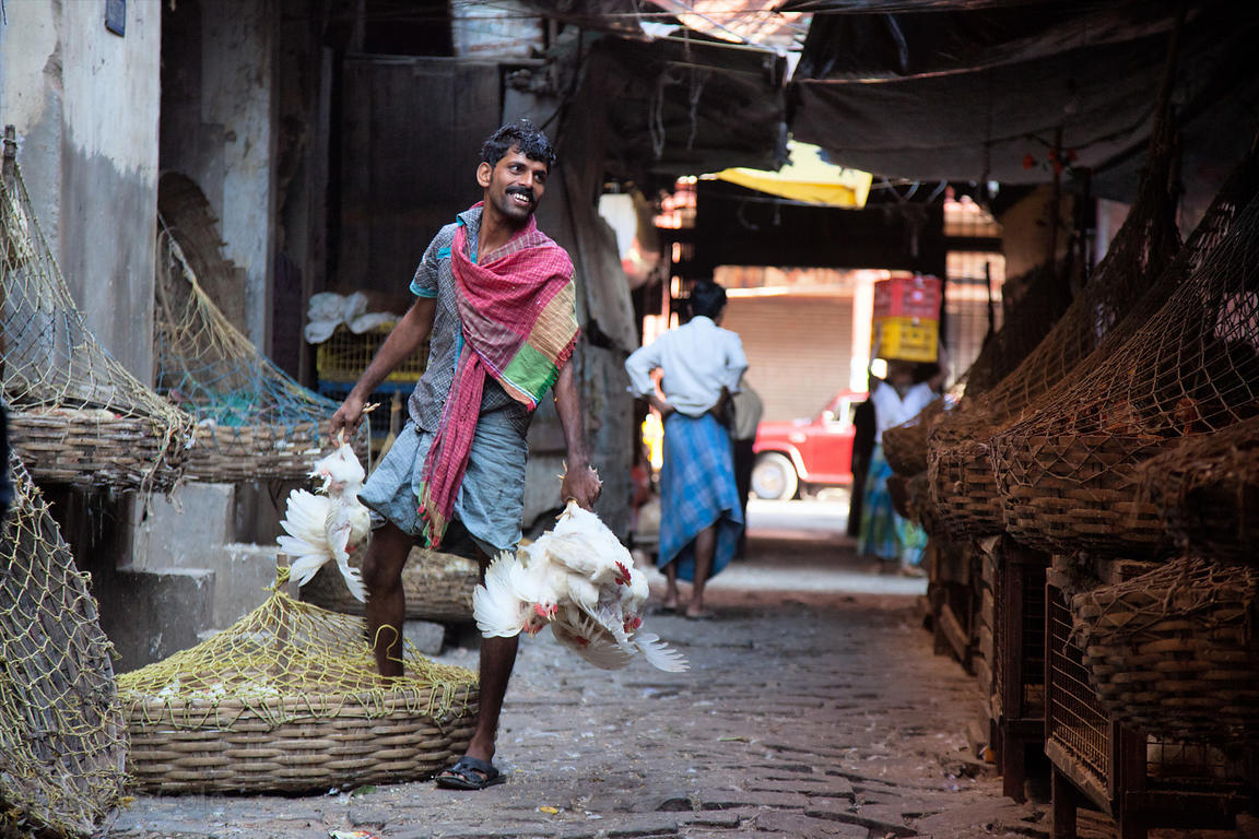 A man takes chickens to slaughter, Newmarket, Kolkata, India.