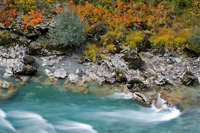 River Tara with autumnal vegetation on bank, Durmitor NP, Montenegro, October 2008
