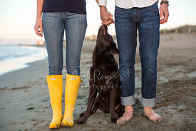 Brown Chocolate Labrador on Beach Looking Up At Couple