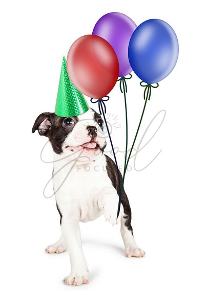 Playful Birthday Puppy Holding Balloons