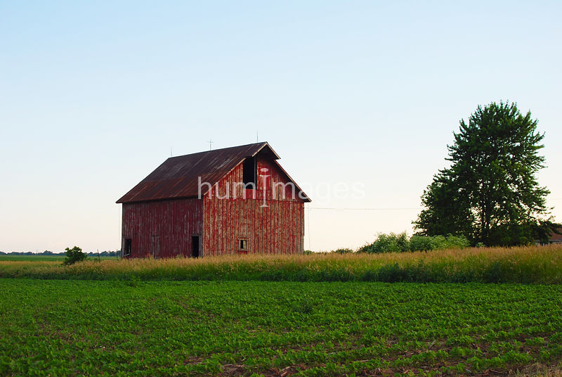 Red barn on surrounded by crops